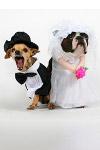 The Alternative Royal Wedding Reception - Udderbelly