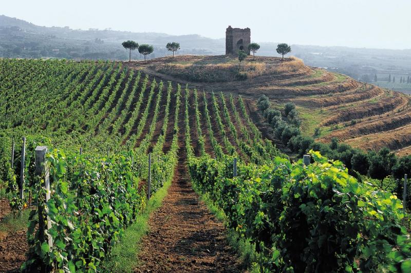 Roman Vineyards and Wine Tasting