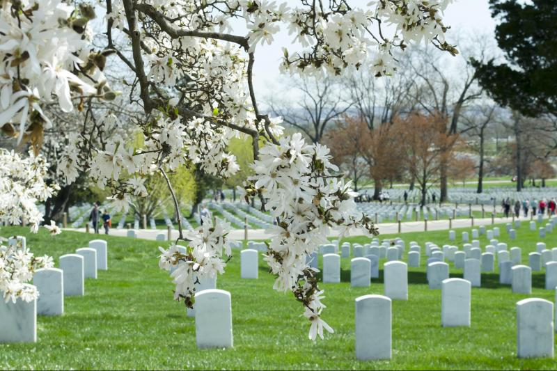 Mount Vernon & Arlington National Cemetery