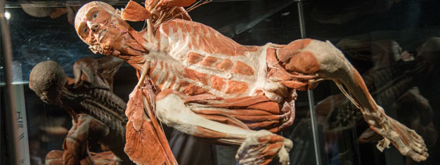 "Besök den nya utställningen av Gunther von Hagens 'The Happiness Project"" vid Body Worlds i Amsterdam. Boka biljett till Body Worlds The Happiness Project här."