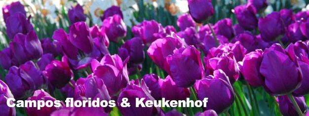 Inspire-se pela beleza dos Keukenhof Gardens no desabrochar da primavera. Reserve aqui e passe direto pelas filas neste tour guiado, incluindo transporte ida e volta desde Amsterdam!