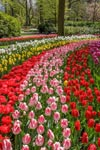 Keukenhof: Skip The Line and transport from Amsterdam