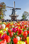 Keukenhof - billets coupe-files