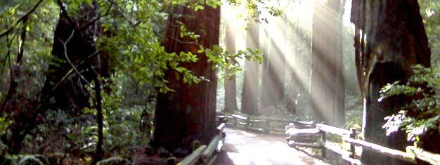 Disfruta dos de los sitios mas populares de San Francisco. Explora Muir Woods por la mañana y sigue con una cata de vinos por la tarde.