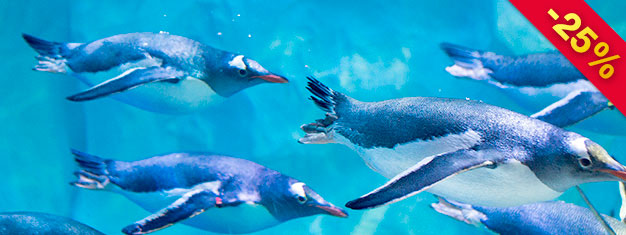 Tickets To Sea Life London Aquarium Londonticketsinternational Com