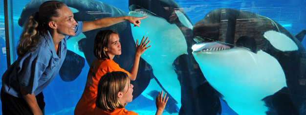 I SeaWorld får du den unike muligheten til å komme så nært en delfin at du kan ta på finnen, se eksotiske fisk og opplev mange show, turer og utstillinger.