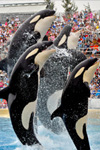 Tickets voor Sea World in San Diego