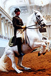 Spanish Riding School: Show