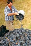 Viiniretki Douron laaksoon