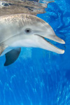 Delfinen Winter - Clearwater Marine Aquarium