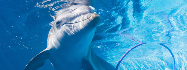 Meet Winter the Dolphin and other rescued marine animals at Clearwater Marine Aquarium and hear her amazing story! Incl. transfer. Book tickets online!