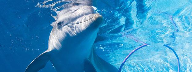 Treffen Sie Winter, den Delphin, und viele weitere gerettete Meerestiere im Clearwater Meeresaquarium! Inkl. Transfer, Tickets online buchen!