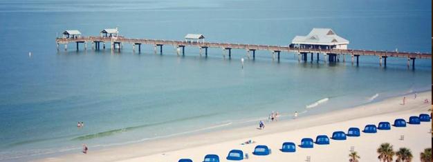 Relaxez vous et nagez à Clearwater Beach, profitez d'un repas et rendez visite à Winter le Dauphin à Clearwater Marine Aquarium. Réservez en ligne!