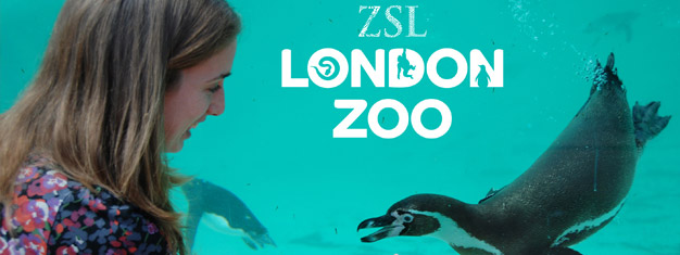 Kom dichtbij alle wervelende dieren in ZSL London Zoo. Meer dan 760 verschillende soorten en een aparte dierentuin voor kinderen. Bestel je tickets hier!