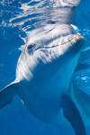 Biljetter till Delfinen Winter - Clearwater Marine Aquarium, inkl. lunch