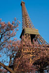 Sightseeing, Cruise and Eiffel Tower