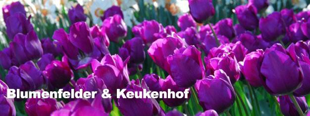 Besuchen Sie den Keukenhof Park mit seinen Gärten im Frühing. Hier buchen und ohne Anstehen mit Ihrem Guide vorbei an der Warteschlange spazieren. Transport ab Amsterdam und retour inklusive. Jetzt buchen!