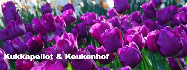 Vieraile Keukenhofissa keväällä. Varaa täältä ja ohitat jonot oppaasi johdolla. Kuljetus Amsterdamista puutarhalle ja takaisin sisältyy hintaan. Varaa nyt!