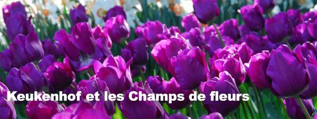 Visitezles célèbres jardinsde fleurs de Keukenhof pendant le printemps. Réservez ici pour cette visite avec un guide ainsi qu'un billet pré-réservé (coupe-file). Un Transport depuis/à destination d'Amsterdam est inclus. Réservez dès maintenant!
