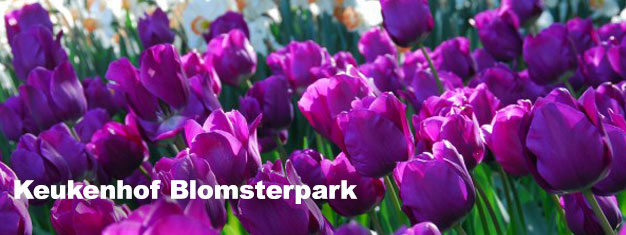 Besök Keukenhof Garden blomsterpark i vår. Boka biljetter här och undvik köerna när du går in med din guide. Transport till & från Amsterdam ingår. Boka nu!