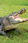 Tickets to Gatorland with hotel transfer