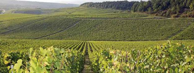 Nyd en heldagstur til Bourgogne-regionen i Frankrig! Besøg en lokal vinbonde, en vinkælder og smag masser af god vin! Transport & frokost er inkluderet.
