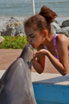 Swim with Dolphins in St. Augustine