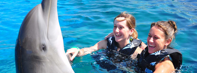 Feed and touch the dolphins at the Marineland Dolphin Sanctuary. This tour includes a fun dolphin experience and tour of St. Augustine. Book online!