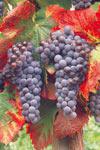 Vinprovning i Napa Valley - heldag